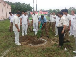 yamunanagar hulchul tree plantation n jagadhri wokshop railway colony