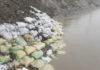 पश्चिमी यमुनानहर के पक्के घाट को पानी से बचाने के लिए लगाए गए मिटटी के कटटे।